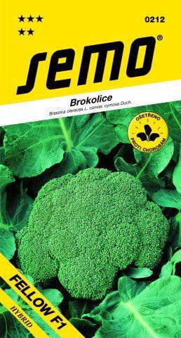 Brokolica Fellow F1  30sem. SEMO