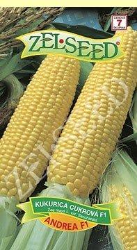 Kukurica cukrová Andrea F1 poloneskorá 28g Zelseed