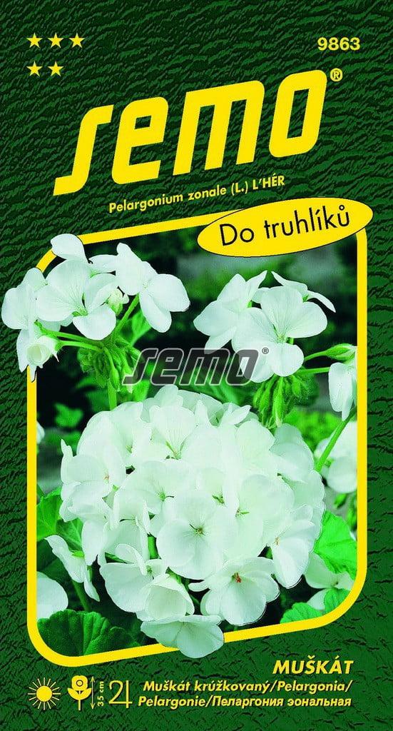 Pelargónia krúžkovaná biela