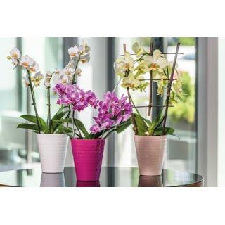 Diamant orchidea mix